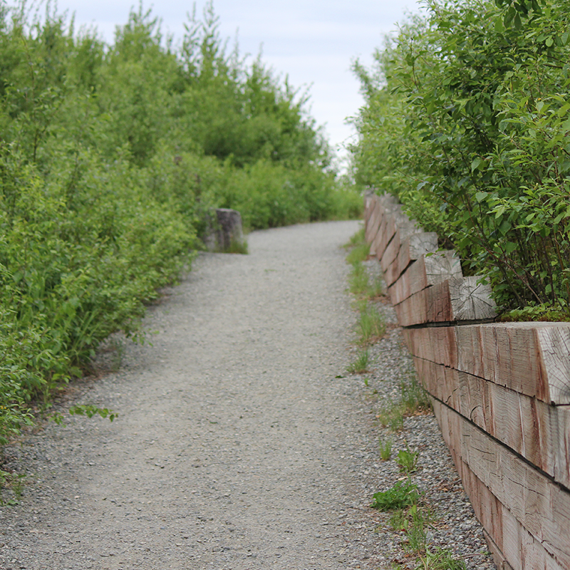 The hiking trail at Denali Viewpoint South.