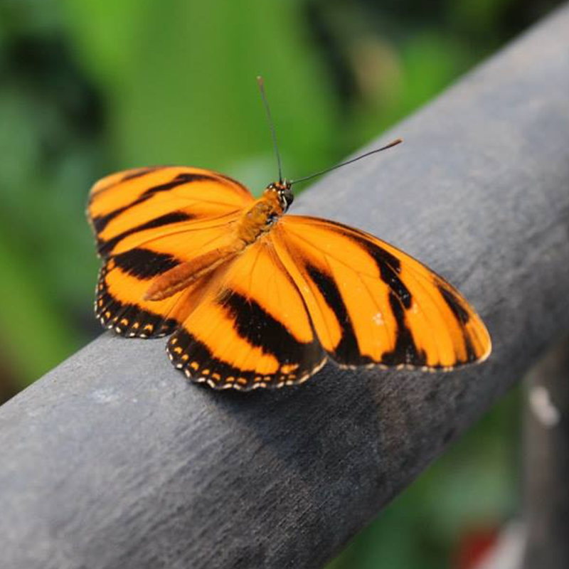 A butterfly in Costa Rica